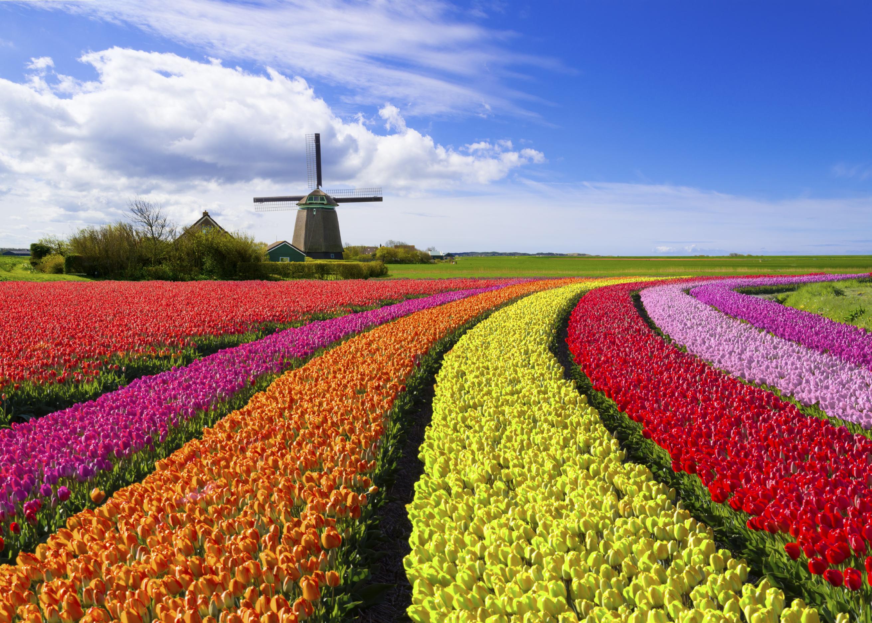 Afbeeldingsresultaat voor bollenvelden in bloei