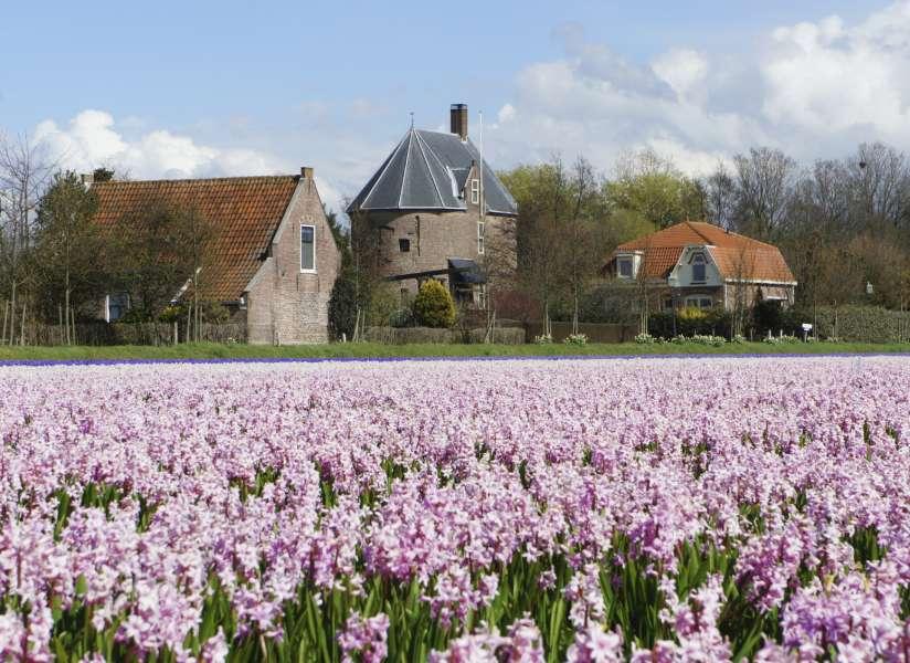 Bollen Bloeiend Voorjaar : Prachtige bloesem en bollenfietsroutes fietsen